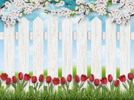 Red tulip flowers, blooming tree branch and grass on white fence background. Spring landscape. Illustration
