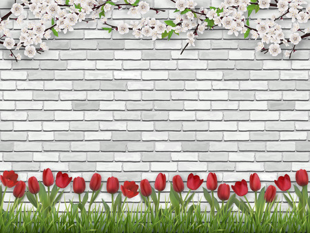 Flowering tree branches and tulips on a white brick wall background.