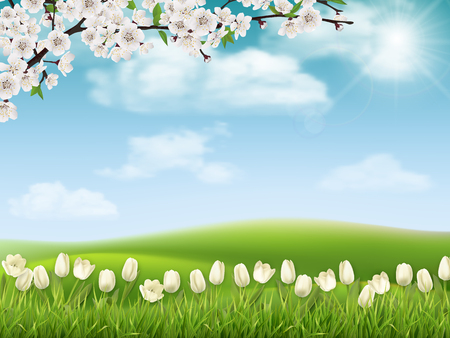 Spring landscape background with tree branch and tulip flowers.