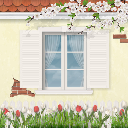 Old white window with shutters in stucco wall of a house. Blooming branch of a tree. Tulip flowers and grass in a front garden.