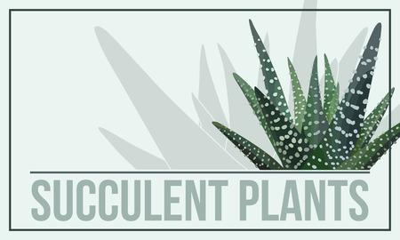 Haworthia (zebra cactus) poster. Illustration