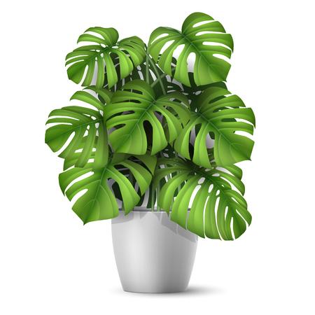 Monstera en una olla. Planta tropical para decoración interior de hogar u oficina. Ilustración de vector en vector realista estilo 3d.