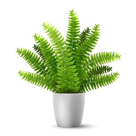 Helecho realista vector en una olla. Planta de interior ornamental. Ilustración de vector