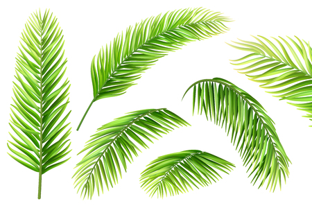 Palm tree leaves vector set. Realistic branches of a tropical plant for decorating a vacation card, invitation or flyer. Illustration
