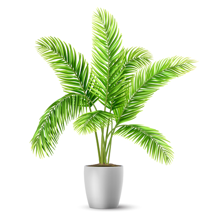 Palm tree leaves in a pot. A plant for decorating an interior of a house or an office. Vector realistic illustration.