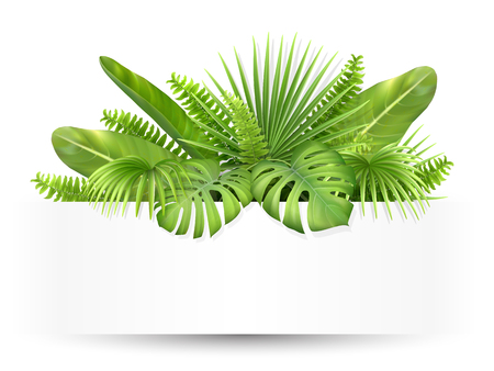 Banner with tropical leaves. Foliage of exotic plants. Vector realistic illustration for decorating a greeting card, invitation or flyer.  イラスト・ベクター素材