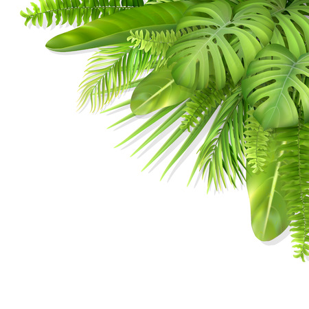 Tropical leaves in a corner. Foliage of exotic plants. Vector realistic illustration for decorating a greeting card, invitation or flyer.