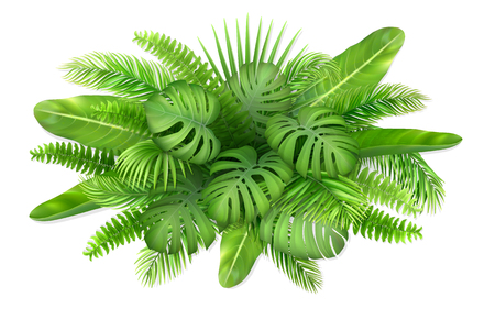 A bunch of tropical leaves. Foliage of exotic plants. Vector realistic illustration for decorating a greeting card, invitation or flyer.