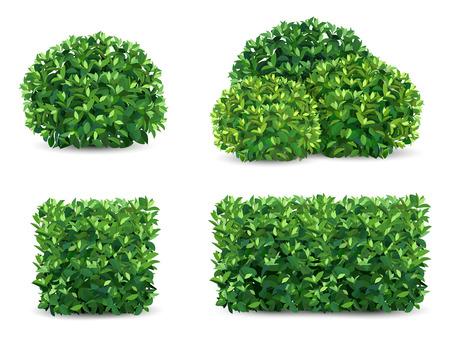 Cespuglio di vettore in diverse forme. Un arbusto di piante ornamentali per la progettazione di un parco, un giardino o una recinzione verde. Vettoriali
