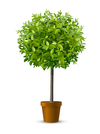 Vector realistic tree in a flowerpot. Houseplant for home or office interior decoration. Isolated on white background