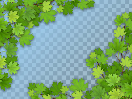 Set of realistic vector maple tree branches with green leaves. Element of natural design. Isolated on a transparent background. Illustration