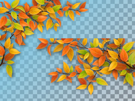 Set of realistic vector tree branches with autumn leaves. Yellow and red foliage. Element of natural design. Isolated on a transparent background.