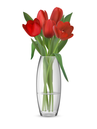 A bouquet of red tulips in a glass vase with water. Element of interior decor. Realistic vector illustration. Isolated on white background with transparent effect.