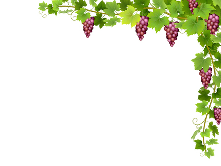 Hanging bunches of ripe red grapes with branches and leaves.