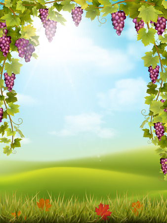 Bunches of red grapes like frame on the background of the rural landscape with valley, hills and sky. Vector illustration about the harvest and winemaking.
