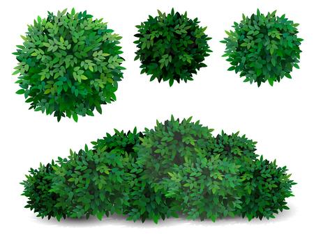Cespuglio di vettore in diverse forme. Corona dell'albero. Arbusto ornamentale per la decorazione di un parco, di un giardino o di un recinto verde. Vettoriali