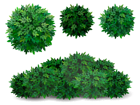 Vector bush in different forms. Tree crown. Ornamental plant shrub for decorate of a park, a garden or a green fence. Vector Illustration