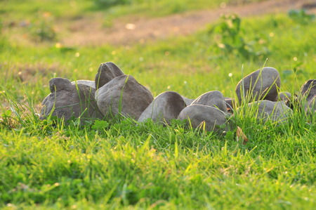 Stones and grass with dew on a sunny morning. Defocus bokeh effect. Stock Photo