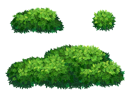 Set of green bush and tree crown of different shapes. Ornamental plant shrub for decorate of a park, a garden or a green fence. Thick thickets of shrubs. Foliage for spring and summer card design.