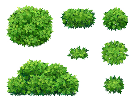 Set of green bush and tree crown of different shapes. Ornamental plant shrub for decorate of a park, a garden or a green fence. Illustration