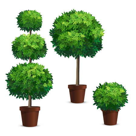 Set of topiary trees in a pots. Vector Illustration