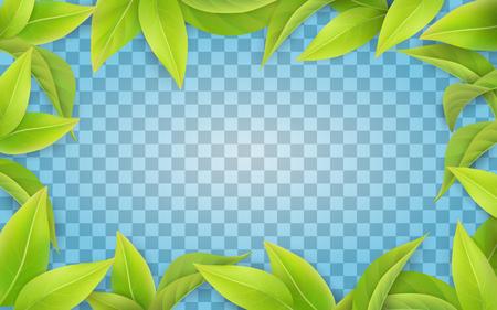Green leaves frame on transparent
