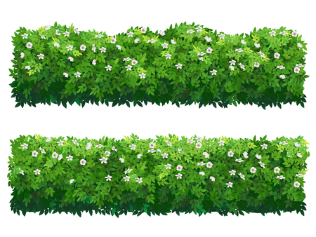 Blühende buschgrüne Hecke. Buchsbaum- oder Hibiskussträucher.