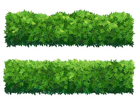Grüner Zaun aus Buchsbaumsträuchern. Zierpflanze. Vektorgrafik