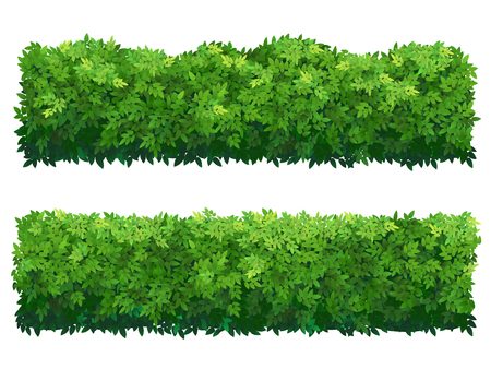 Green fence from boxwood shrubs. Ornamental plant.