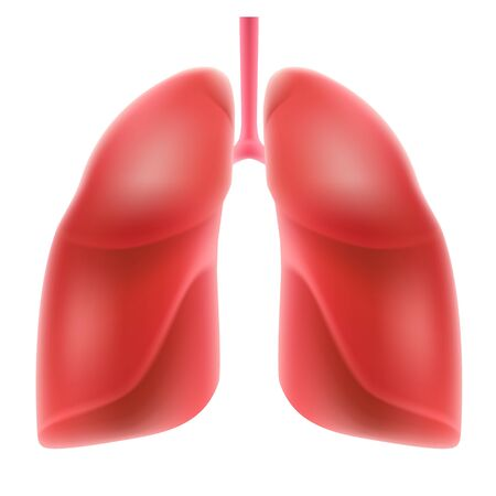 Human lungs isolated on white background. Stock Illustratie