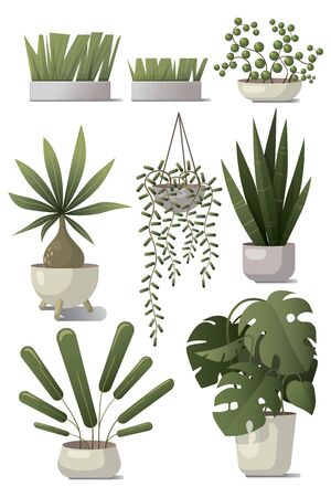 Vector set of home plants.
