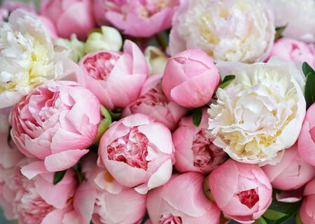 Background with beautiful white and pink flowers peonies.