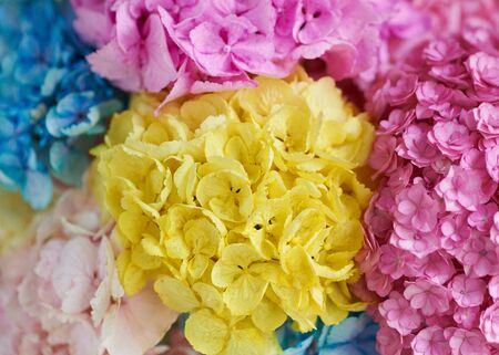 Bouquet of colored flowers peonies.