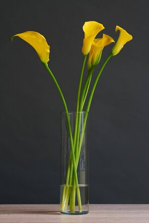 Beautiful bouquet of yellow calla flowers. Flowers in a vase, on a dark background.