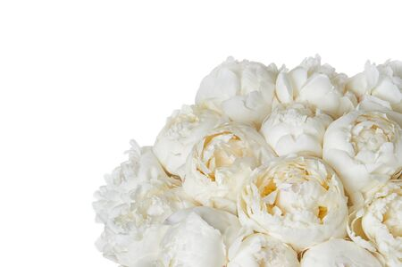 Background with beautiful bouquet of flowers peonies. White peonies on white background, isolated. Design for greeting card or invitation.