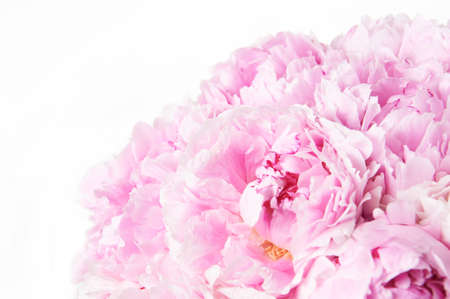Background with beautiful bouquet of flowers peonies. Pink peonies on white background, isolated. Design for greeting card or invitation. Stockfoto