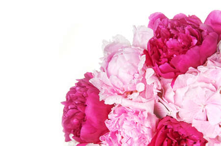 Background with beautiful bouquet of flowers peonies. Red and pink peonies on white background, isolated. Design for greeting card or invitation.