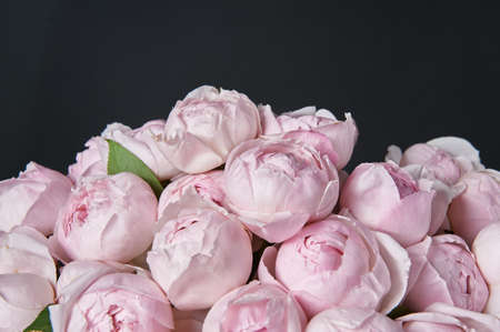 Beautiful bouquet of flowers with pink roses. Background for a greeting card. Dark background. Banco de Imagens