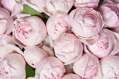 Beautiful bouquet of flowers with pink roses. Background for a greeting card.