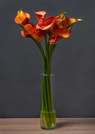 Bouquet of Red and Yellow Calla Lilies in a vase on the table on dark background. Banco de Imagens