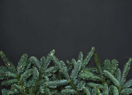 Dark Christmas background with fir branches. Blank for a greeting card.
