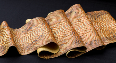 Genuine Python snakeskin leather, snake skin, texture, animal, reptile on a black background.