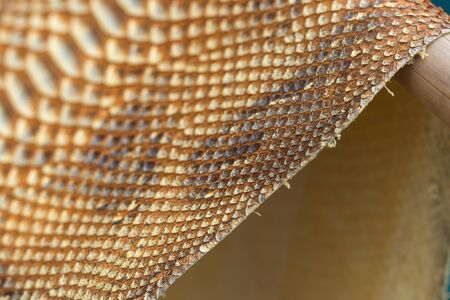 Genuine python snakeskin leather, snake skin, texture background. Stock Photo