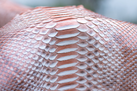 Genuine python snakeskin leather, texture background Stock Photo