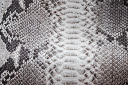 Reptile snake texture closeup, fashion zigzag snakeskin python picture. Reklamní fotografie