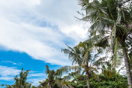 borabora: Beautiful palm trees on the beautiful landscape background and blue sky. Tropical beach palm trees relaxation zen inspirational nature background concept. Bali island.