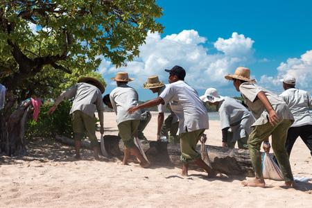BALI, INDONESIA - APRIL 26, 2017: Paradise beach workers bringing a big tree on Bali island, Indonesia.