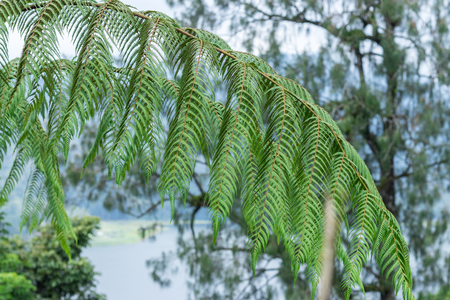 A fern in rain forest on the tropical magic island Bali, Indonesia.