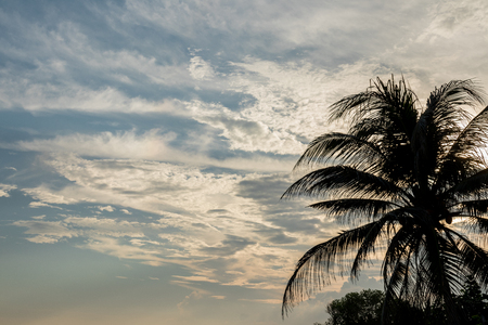 diagonal: Palm tree at susnset time on a tropical Bali island, Indonesia. Stock Photo