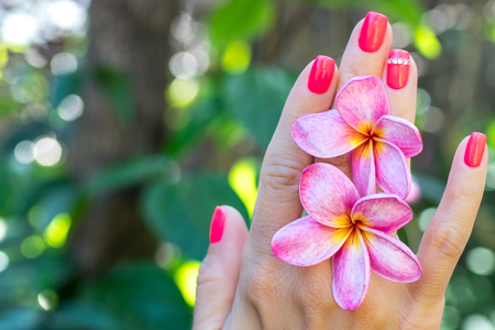Plumeria frangipani flower in woman hand on a beautiful nature background Stock Photo